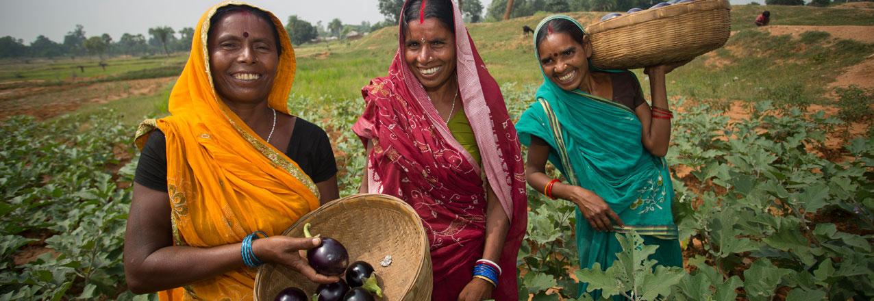 Indian women with baskets of eggplants
