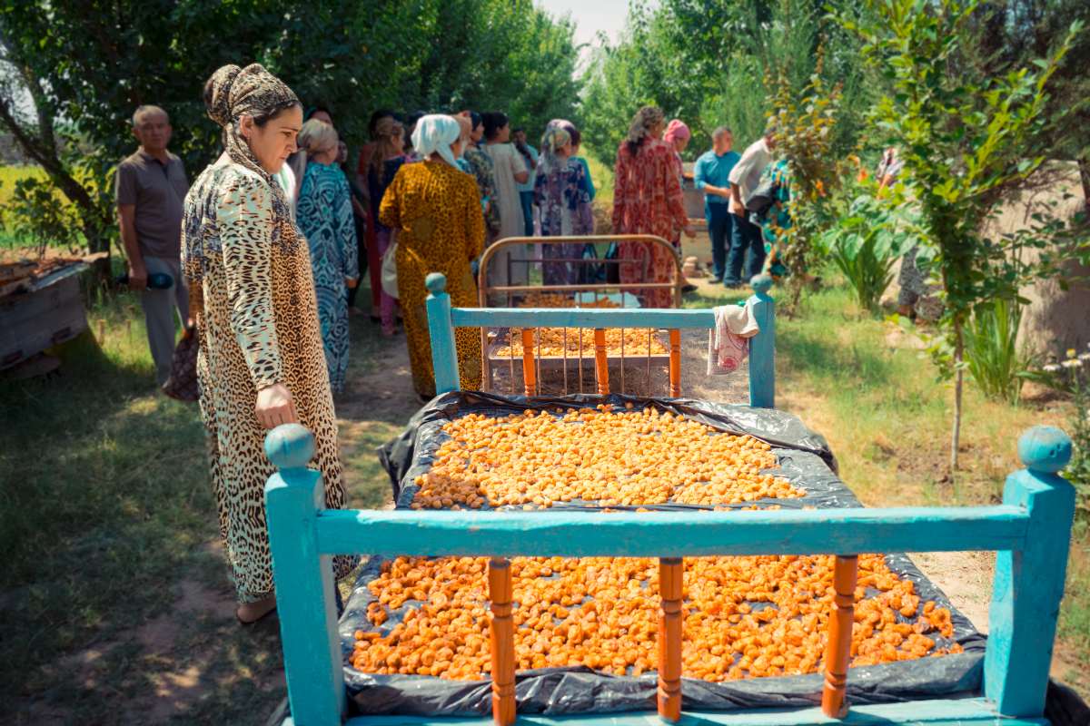Farmers attend a training on women's land rights and learn how to dry apricots for market on a local farm in Tajikistan's Khatlon province.