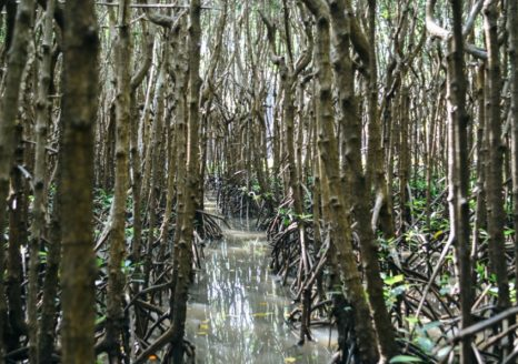 Property boundaries in community-managed mangrove forests of Sulawesi, Indonesia.