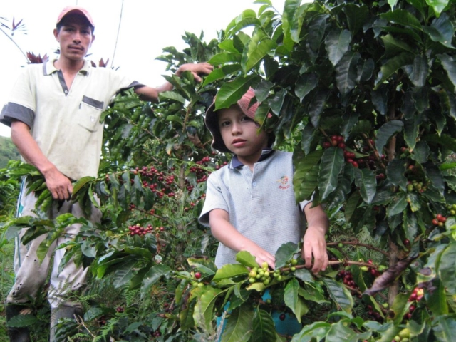 A farmer and his son in Chapparal Municipality