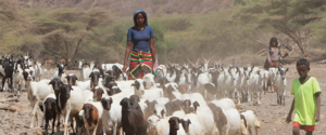 Pastoral Communities Receive 2.7 Million Hecatres of Land in Ethiopia