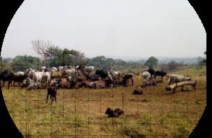 animals in field