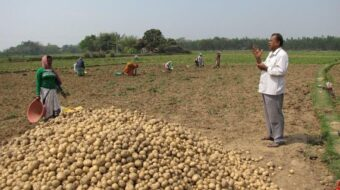 Indian farmers in field with pile of potatoes